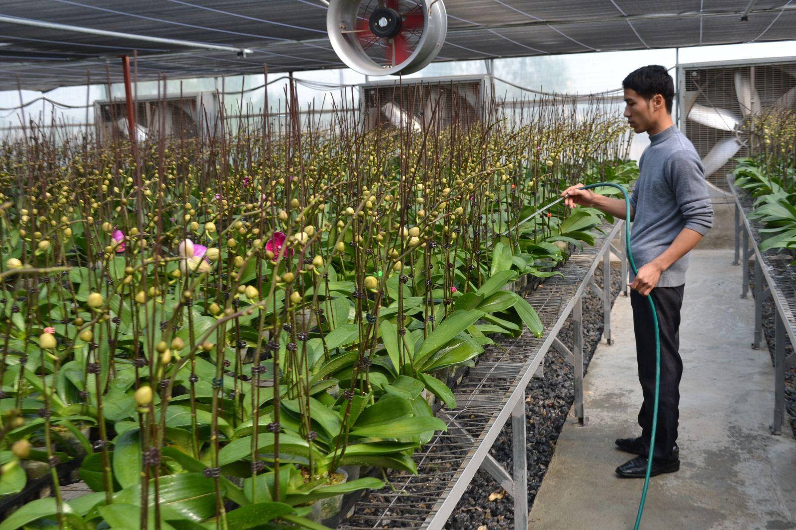 Làm giàu từ ngành nông nghiệp công nghệ cao