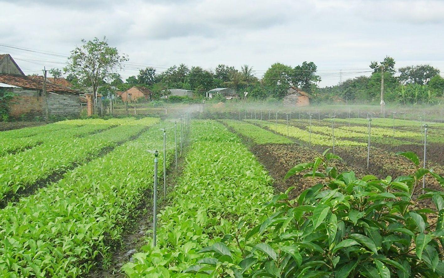 Tìm hiểu kĩ thuật phun mưa trong nông nghiệp