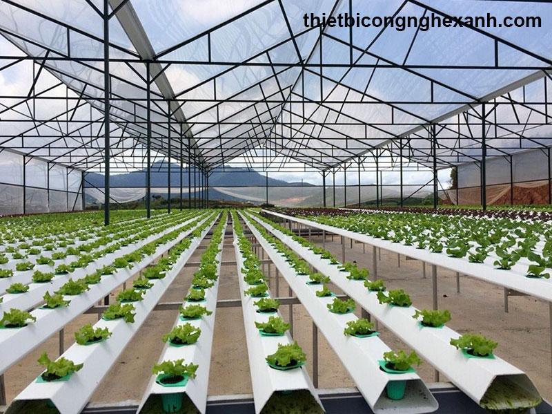Cách trồng rau sạch trong nhà lưới được áp dụng hiện nay